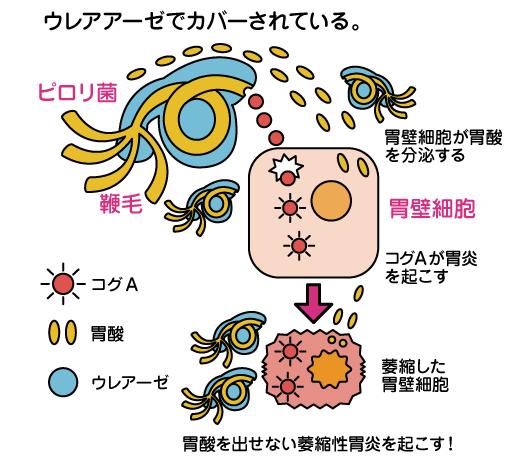 と ピロリ は 菌